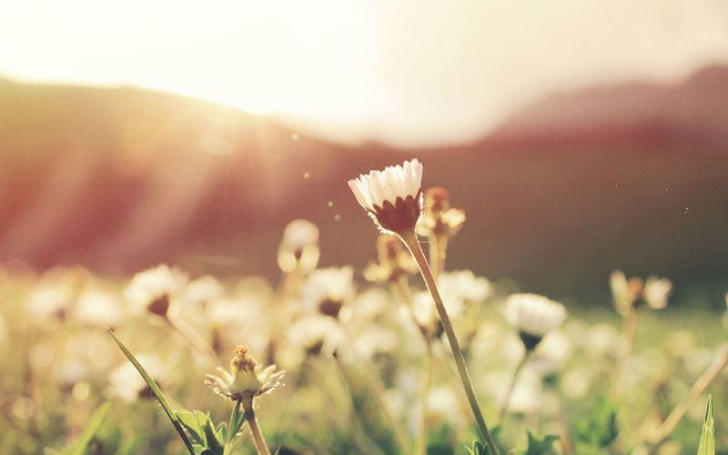 Flower of Breath
