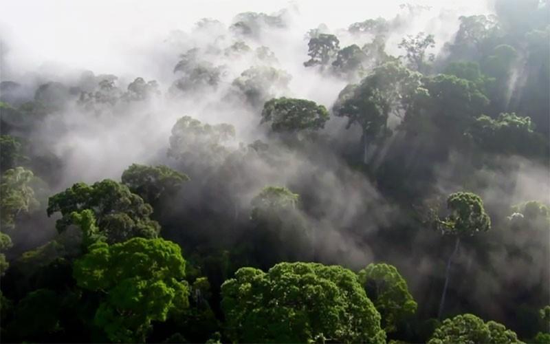 Picture of पर्यावरण (Paryavaran)