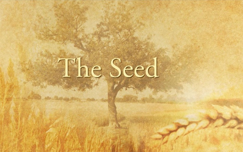 The Seed (Feature-length)