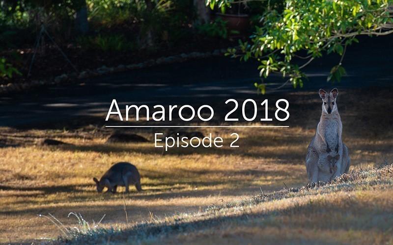 Amaroo 2018 Episode 2 (Video)