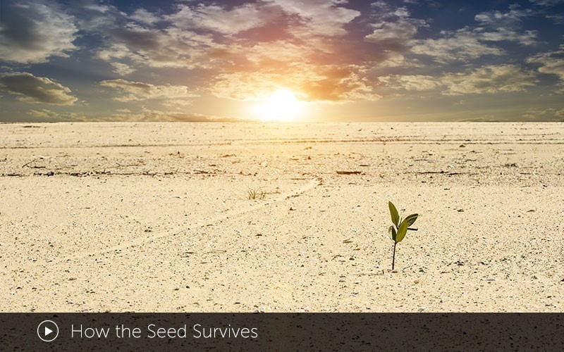 How the Seed Survives