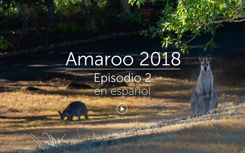Amaroo 2018 Episodio 2 - español (video)