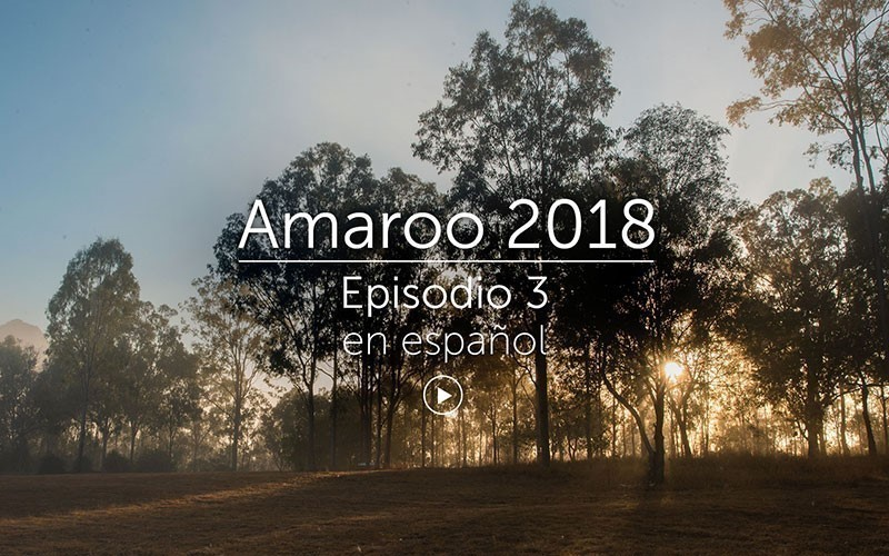 Amaroo 2018 Episodio 3 - español (video)