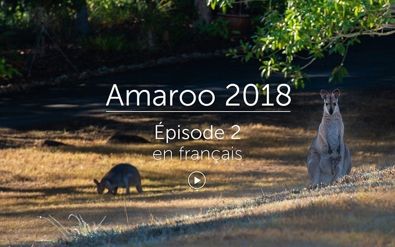 Amaroo 2018 Épisode 2 - français (vidéo)