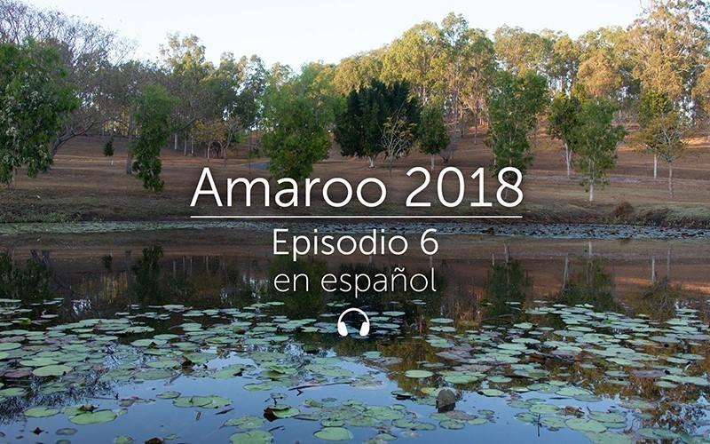 Amaroo 2018 Episodio 6 - español (audio)