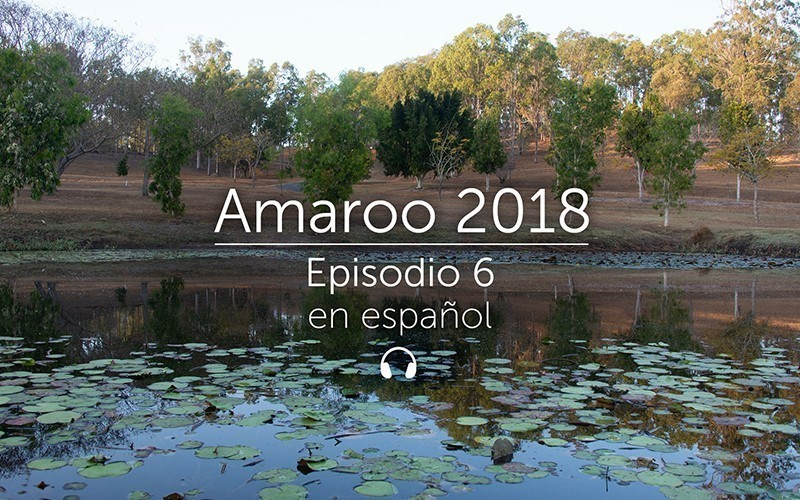 Amaroo 2018 Episodio 6 - español (audio)