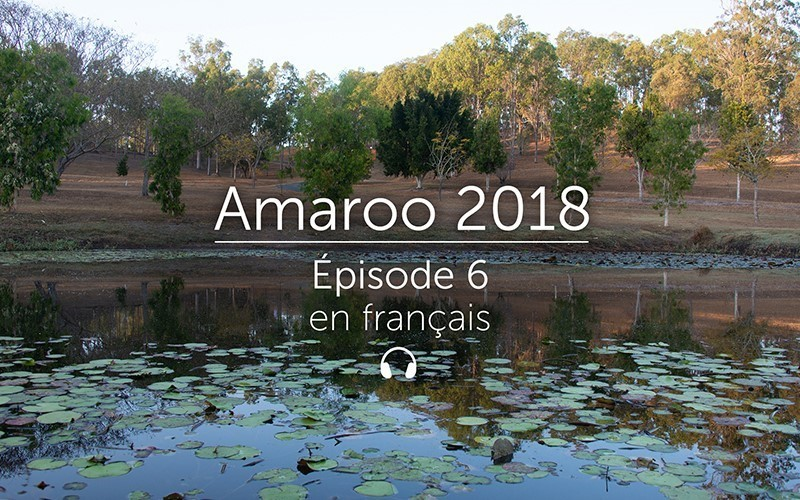 Amaroo 2018 Épisode 6 - français (Audio)