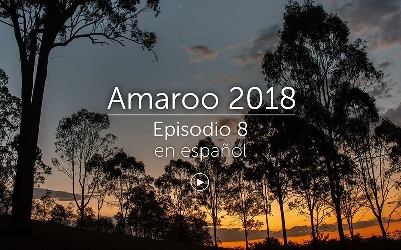 Amaroo 2018 Episodio 8 - español (video)
