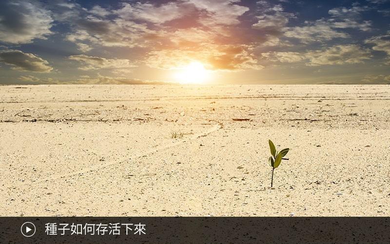 種子如何存活下來