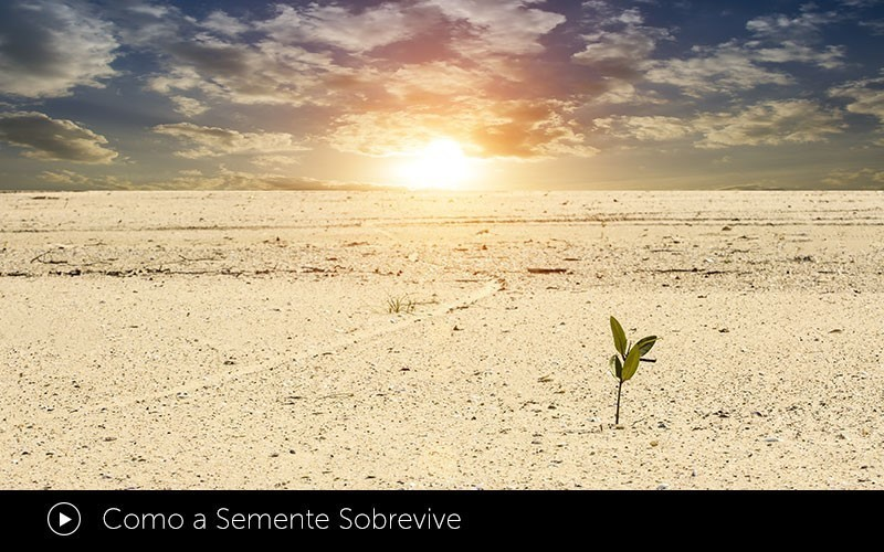 Como a Semente Sobrevive