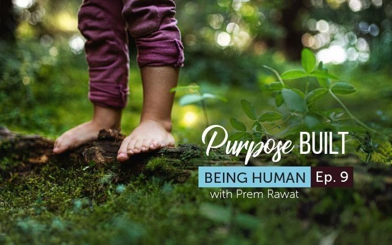 Purpose Built (Audio)