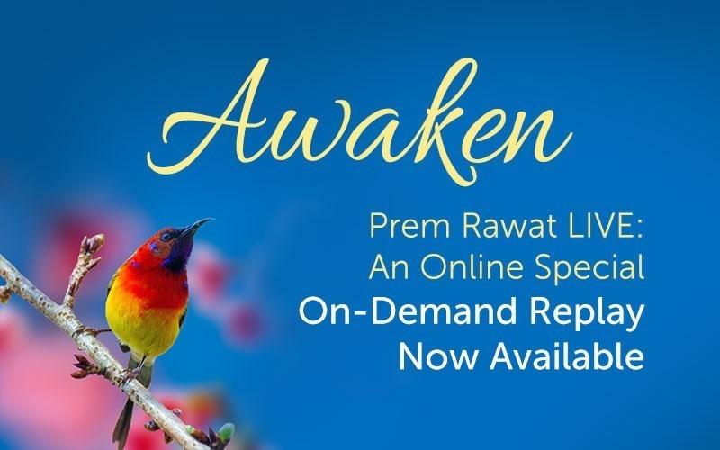 Awaken (Video)